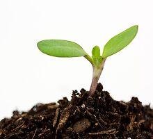 Seedling by psnoonan