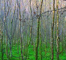 Trees in Glendalough, Ireland by mayahanley