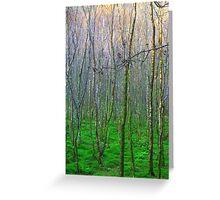 Trees in Glendalough, Ireland Greeting Card