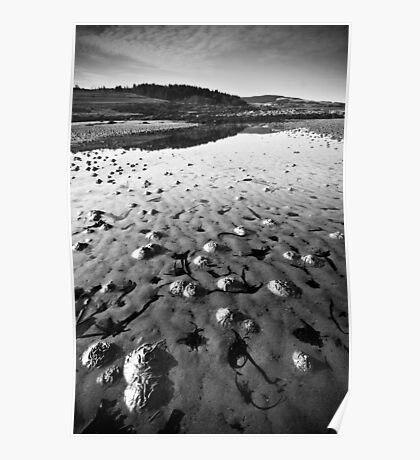 Wormcasts at low tide on Kildonald Point Poster