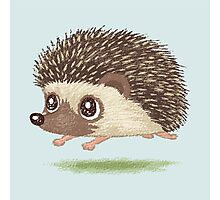 Hedgehog running Photographic Print