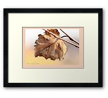 White birch leaf Betula papyrifera A Framed Print
