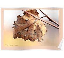 White birch leaf Betula papyrifera A Poster