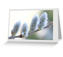 Pussywillow blooms Salix A Greeting Card