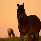 Horses Haunt by Photoplex