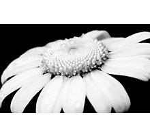 Black & White Daisy Photographic Print