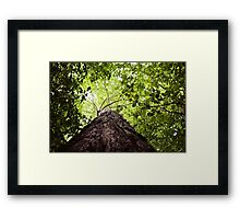 Squirrel's Point of View Framed Print