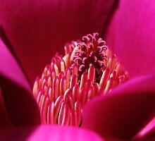 Magnolia Heart by Moetran