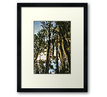 spicy trees Framed Print