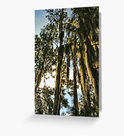 spicy trees Greeting Card
