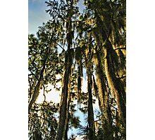 spicy trees Photographic Print