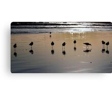 9 Sand Pipers Canvas Print