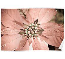 Raindrop on petals Poster