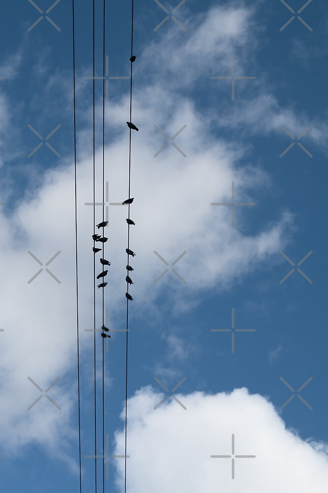 Doves on Overhead Wires by Stacey Lynn Payne