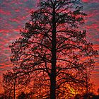 sunfire tree by LeeDukes