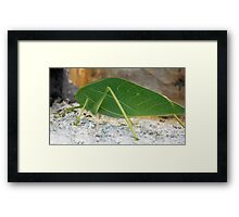 ©NS Green Suit Chilling IIA. Framed Print