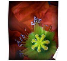 Bright Poppy Poster