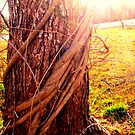 Tree of Dreams by CourtneyMichell