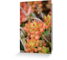 Orange you glad I am water friendly?  Succulent; La Mirada, CA USA Greeting Card