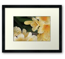 Orchids from Longwood Gardens Framed Print