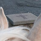 Horse Ears by Felicity Deverell