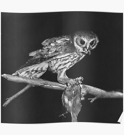 Hunting Owl Poster