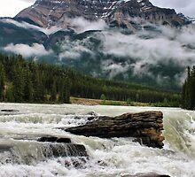 Athabasca Falls, Jasper NP by Teresa Zieba