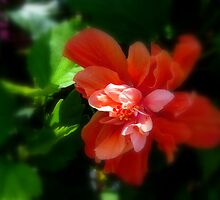 The Royal Hibiscus by billdelaluz