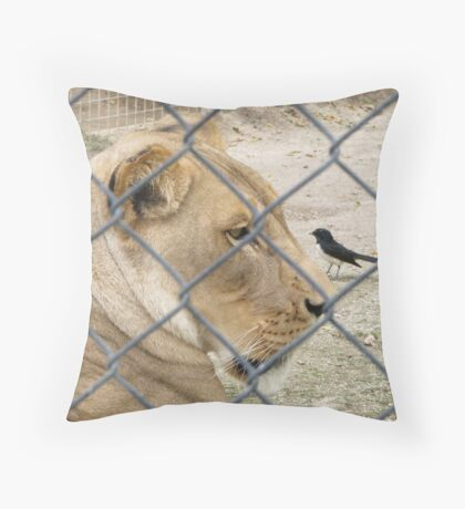 Beware Willy Wagtail! Throw Pillow