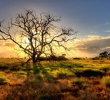 Take One Dead Tree-0702-4 by Barbara Harris
