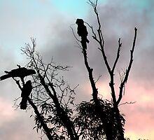 Cockatoo Silhouette by purpleneil59