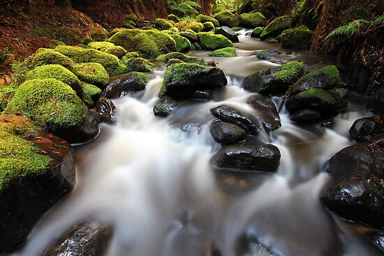 Verdant Stream Sleeps, Otways, Great Ocean Road, Australia by Michael Boniwell