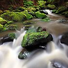 Verdant Stream, Otways, Great Ocean Road, Australia by Michael Boniwell