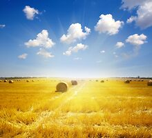 After Harvest  by christinaree