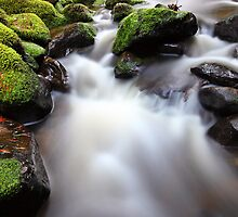 Verdant Stream, Otways, Great Ocean Road, Australia by Michael Boniwell