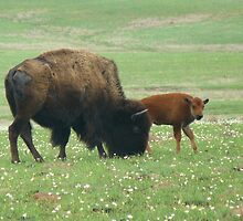 Baby and Momma Bison by Sarah J. Wheeler