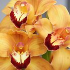 Three delighted with spring; Wang-Lee Garden, La Mirada, CA USA by leih2008