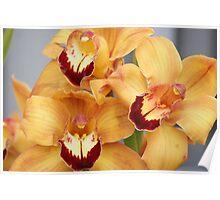 Three delighted with spring; Wang-Lee Garden, La Mirada, CA USA Poster
