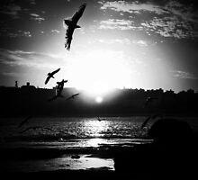 Just spread your wings and soar by MargaretC