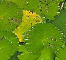 Green by Werner Padarin