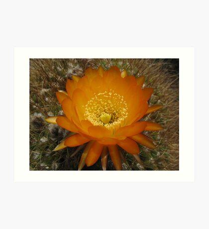 Desert Blossom Art Print
