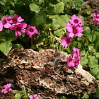 Flowering Clover  in the Rock Garden   by heatherfriedman