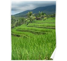 Rice Fields - Bali, Indonesia Poster