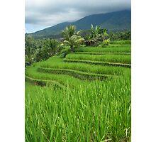 Rice Fields - Bali, Indonesia Photographic Print