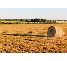 Golden Field Photographic Print
