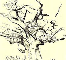 Baobab tree by daanpino
