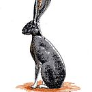 Jack Rabbit by ria gilham