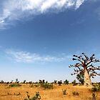 Take On West Africa by helenlloyd
