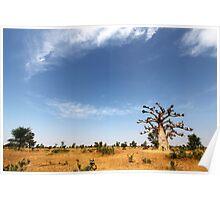 Baobab Tree and Blue Skies Poster