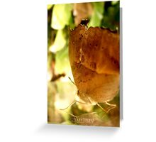 Autum Wings Greeting Card